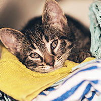 How to Remove Unwanted Pet Hair from Laundry